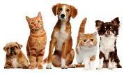Διαχείριση Αδέσποτων και Δεσποζόμενων Ζώων.