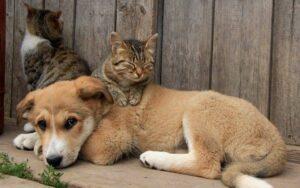 Ενημέρωση για την προσωρινή διακοπή προγράμματος βοήθειας στα αδέσποτα ζώα συντροφιάς.