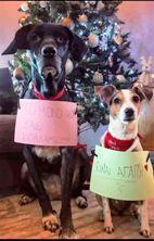 Αυτά τα Χριστούγεννα ας δώσουμε λίγη από την αγάπη μας και στα αδέσποτα!