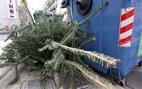 Με ραντεβού η αποκομιδή των Φυσικών Χριστουγεννιάτικων Δέντρων